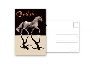 postcardWhiteHorse